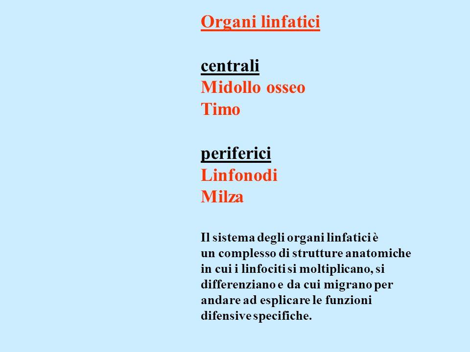 Organi linfatici centrali Midollo osseo Timo periferici Linfonodi Milza Il sistema degli organi linfatici è un complesso di strutture anatomiche in cui i linfociti si moltiplicano, si differenziano e da cui migrano per andare ad esplicare le funzioni difensive specifiche.