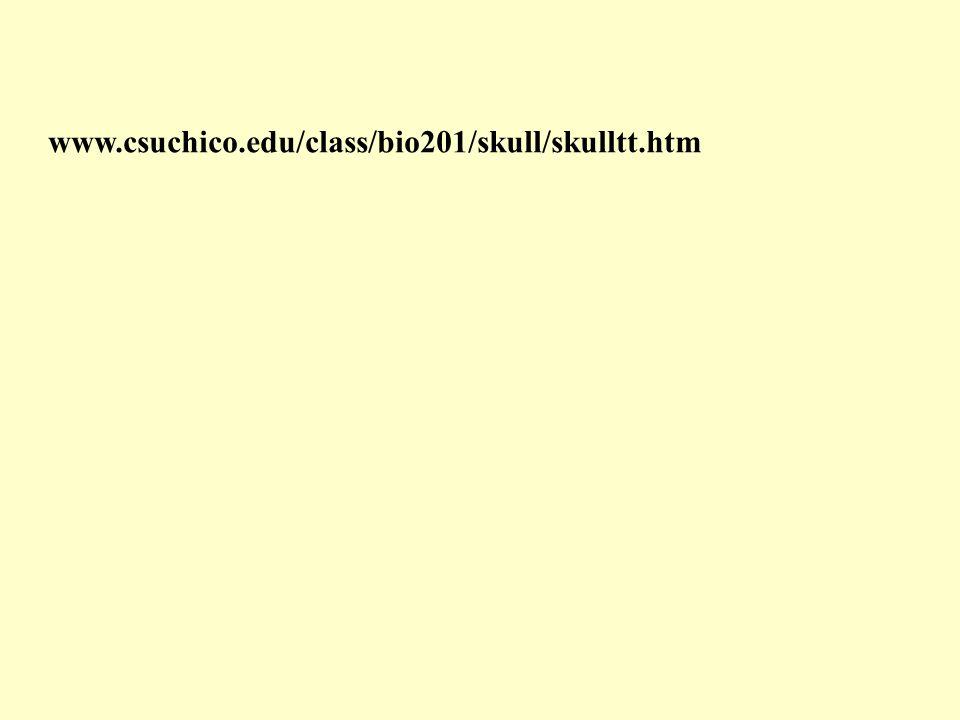 www.csuchico.edu/class/bio201/skull/skulltt.htm