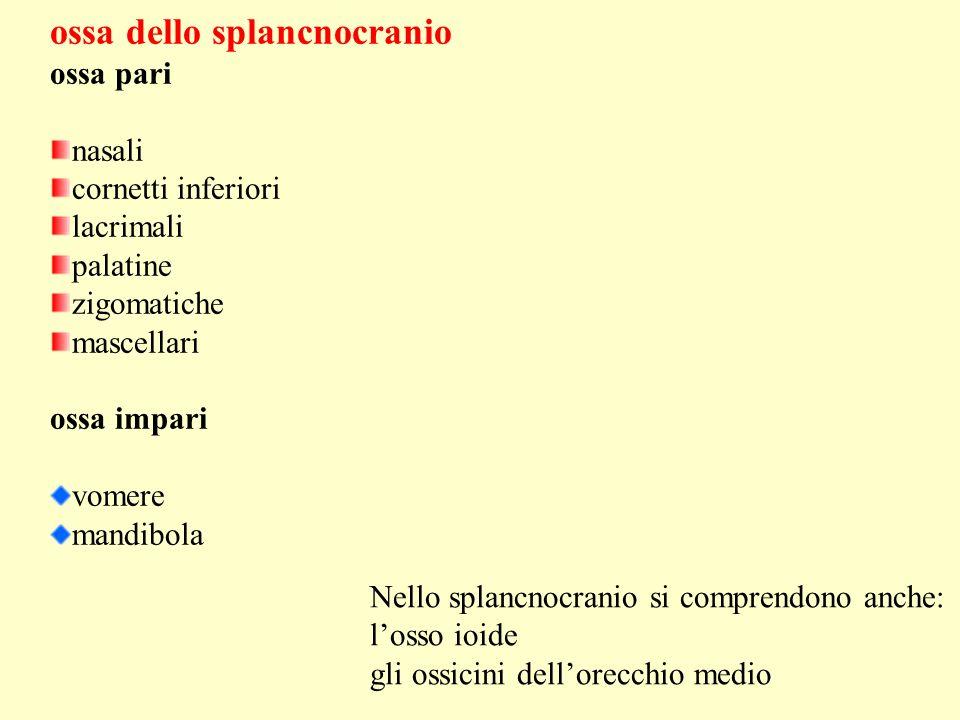 ossa dello splancnocranio ossa pari nasali cornetti inferiori lacrimali palatine zigomatiche mascellari ossa impari vomere mandibola Nello splancnocra