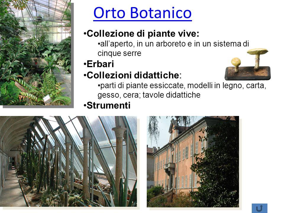 Orto Botanico Collezione di piante vive: allaperto, in un arboreto e in un sistema di cinque serre Erbari Collezioni didattiche: parti di piante essic
