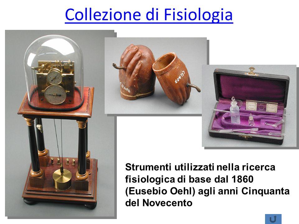 Collezione di Fisiologia Strumenti utilizzati nella ricerca fisiologica di base dal 1860 (Eusebio Oehl) agli anni Cinquanta del Novecento
