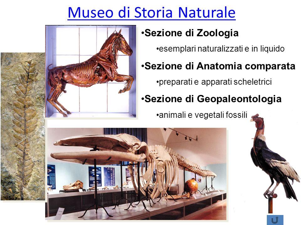 Museo di Storia Naturale Sezione di Zoologia esemplari naturalizzati e in liquido Sezione di Anatomia comparata preparati e apparati scheletrici Sezio
