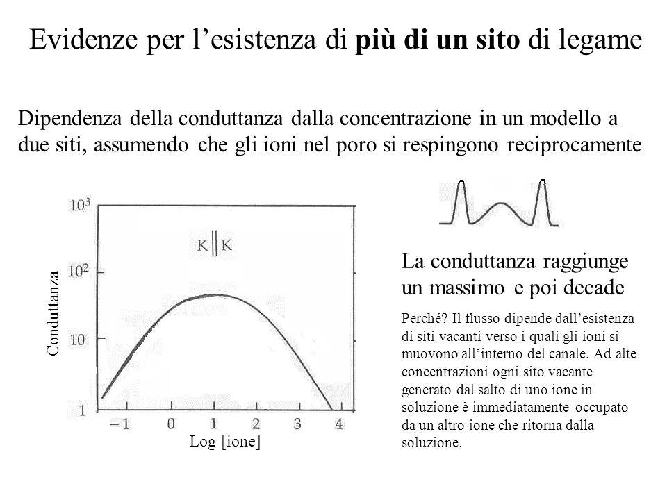Rappresentazione del profilo di diffusione in un canale del Na in termini di barriere energetiche ed avvallamenti. Per uno ione meno permeante, come i