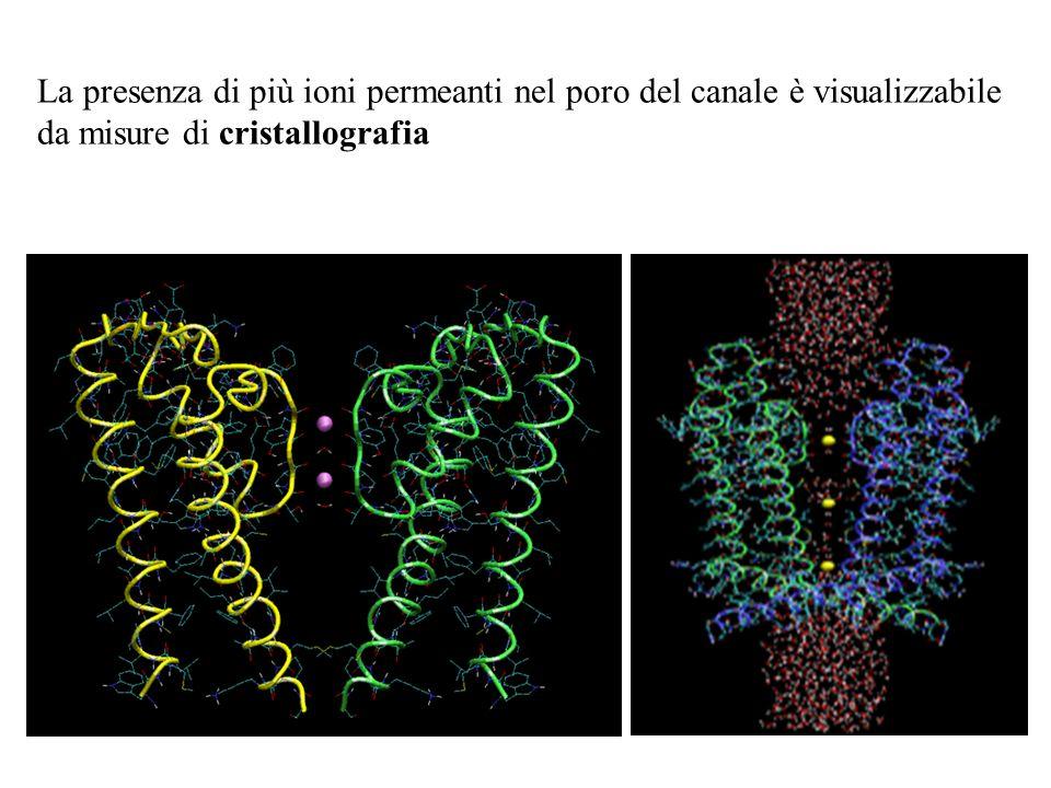 Dipendenza della conduttanza dalla concentrazione in un modello a due siti, assumendo che gli ioni nel poro si respingono reciprocamente Log [ione] Co