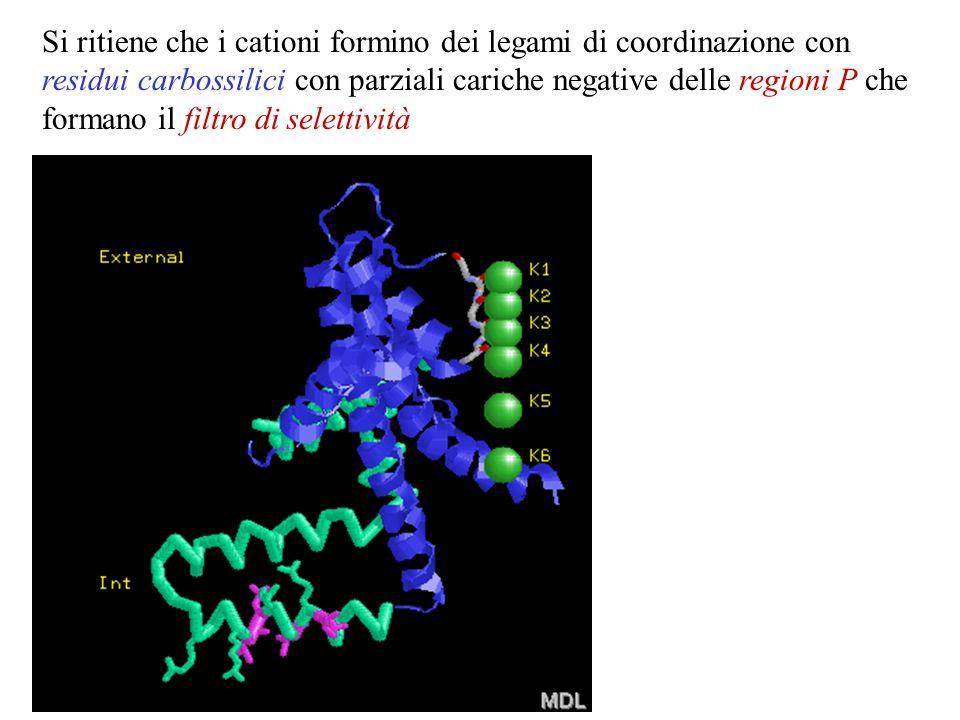 Lo studio diretto dei canali ionici ha dimostrato che molti di essi sono selettivi, spesso ad una sola specie ionica. Si ritiene che i cationi formino