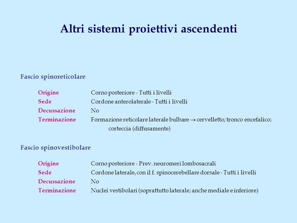 Fascio spinoreticolare Origine Corno posteriore - Tutti i livelli Sede Cordone anterolaterale - Tutti i livelli Decussazione No Terminazione Formazion