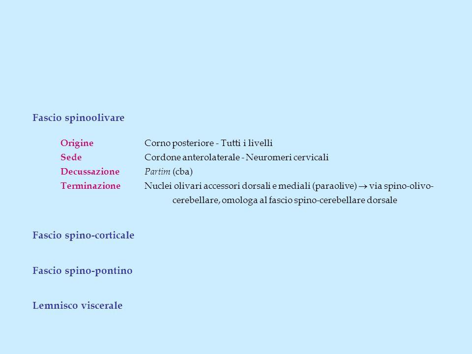 Fascio spinoolivare Origine Corno posteriore - Tutti i livelli Sede Cordone anterolaterale - Neuromeri cervicali Decussazione Partim (cba) Terminazion