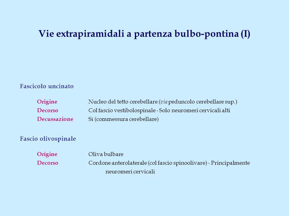 Fascicolo uncinato Origine Nucleo del tetto cerebellare ( via peduncolo cerebellare sup.) Decorso Col fascio vestibolospinale - Solo neuromeri cervica