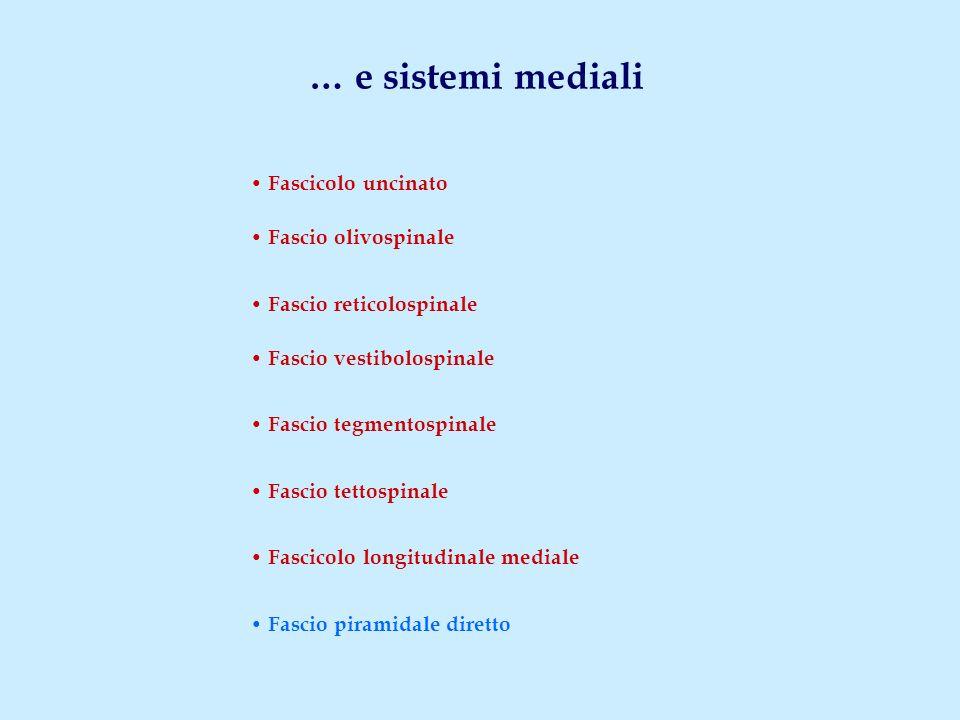 … e sistemi mediali Fascicolo uncinato Fascio olivospinale Fascio reticolospinale Fascio vestibolospinale Fascio tegmentospinale Fascio tettospinale F