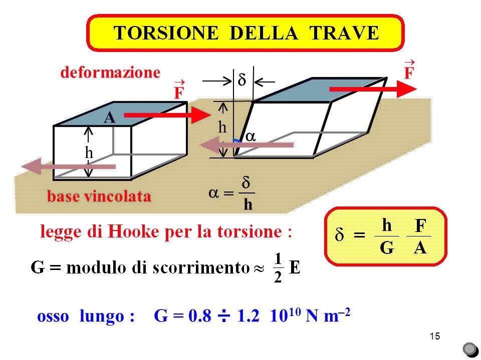 15 osso lungo : G = 0.8 ÷ 1.2 10 10 N m –2 F base vincolata h A = h deformazione h F