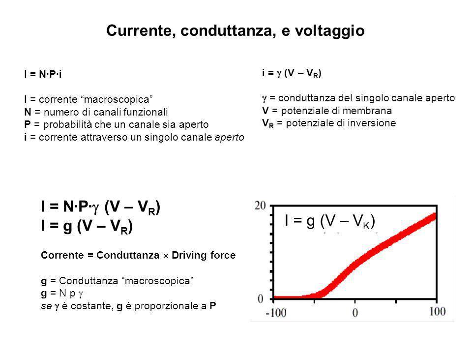 Currente, conduttanza, e voltaggio I = N·P·i I = corrente macroscopica N = numero di canali funzionali P = probabilità che un canale sia aperto i = co