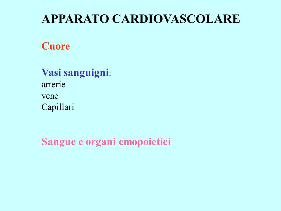 APPARATO CARDIOVASCOLARE Cuore Vasi sanguigni : arterie vene Capillari Sangue e organi emopoietici