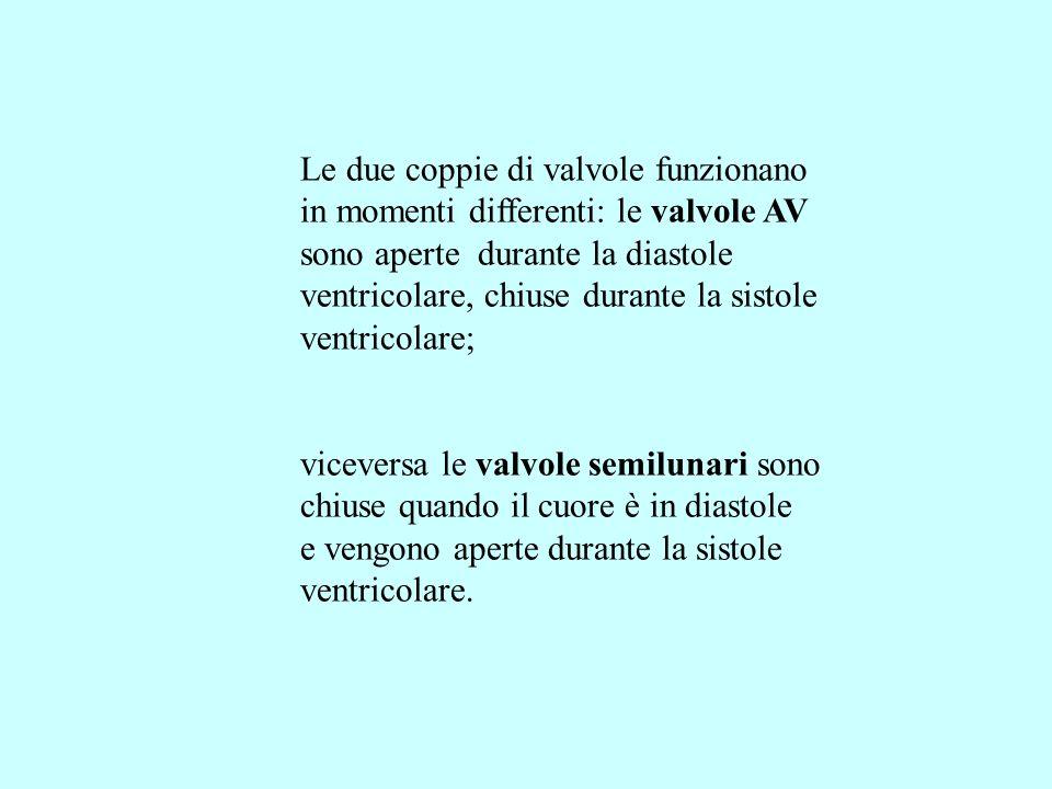 Le due coppie di valvole funzionano in momenti differenti: le valvole AV sono aperte durante la diastole ventricolare, chiuse durante la sistole ventricolare; viceversa le valvole semilunari sono chiuse quando il cuore è in diastole e vengono aperte durante la sistole ventricolare.