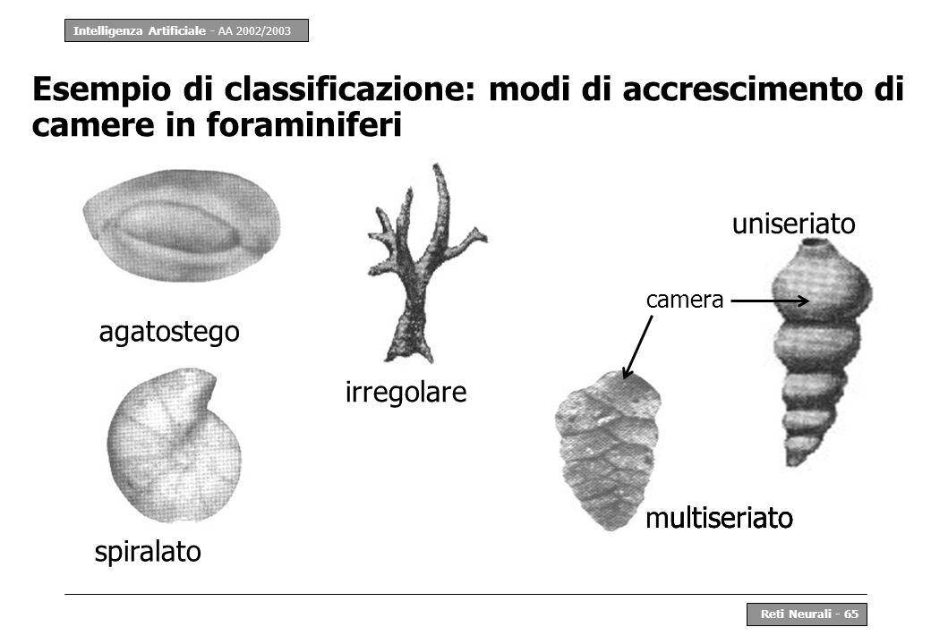 Intelligenza Artificiale - AA 2002/2003 Reti Neurali - 65 Esempio di classificazione: modi di accrescimento di camere in foraminiferi agatostego spira