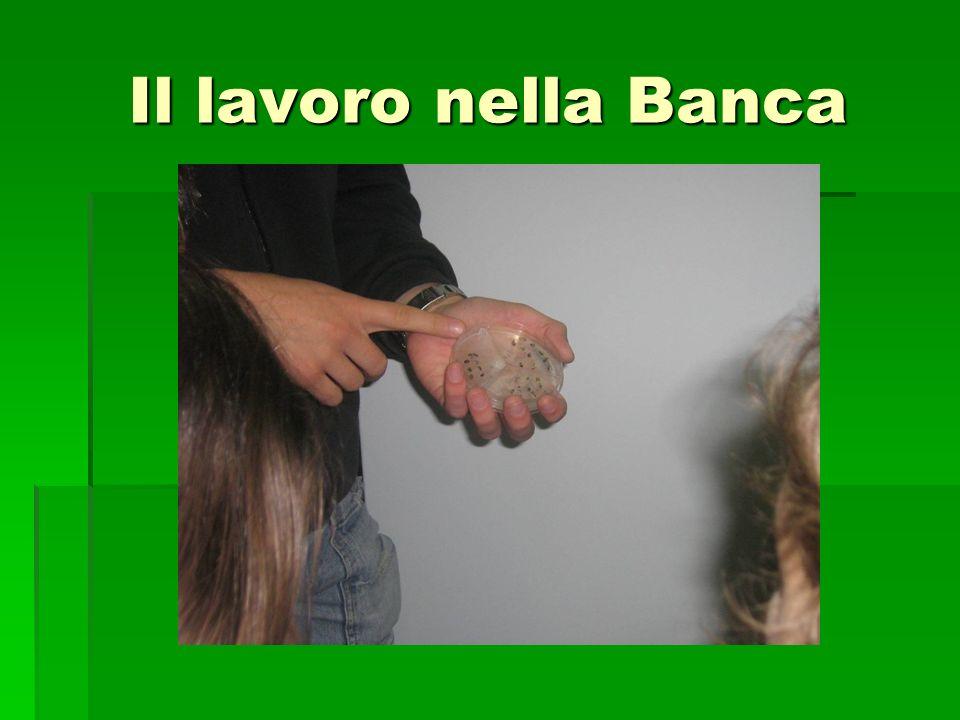 Scuola Primaria E. De Amicis - Classe 5^ A Insegnanti: Marco Milani – Ivana Gaudenzio