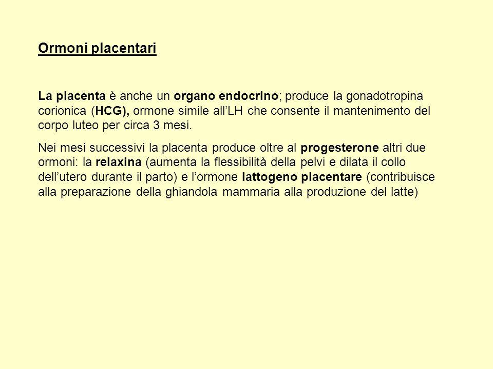 Ormoni placentari La placenta è anche un organo endocrino; produce la gonadotropina corionica (HCG), ormone simile allLH che consente il mantenimento