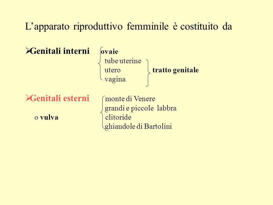 Lapparato riproduttivo femminile è costituito da Genitali interni ovaie tube uterine utero tratto genitale vagina Genitali esterni monte di Venere gra