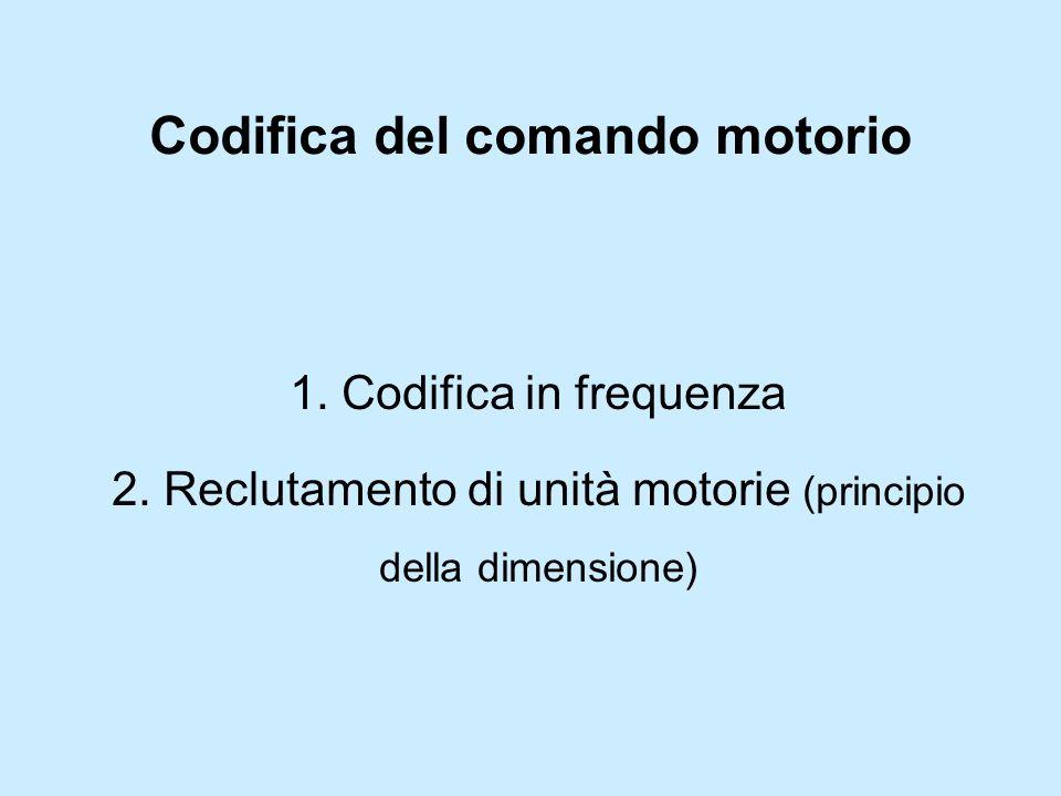 Codifica del comando motorio 1. Codifica in frequenza 2. Reclutamento di unità motorie (principio della dimensione)
