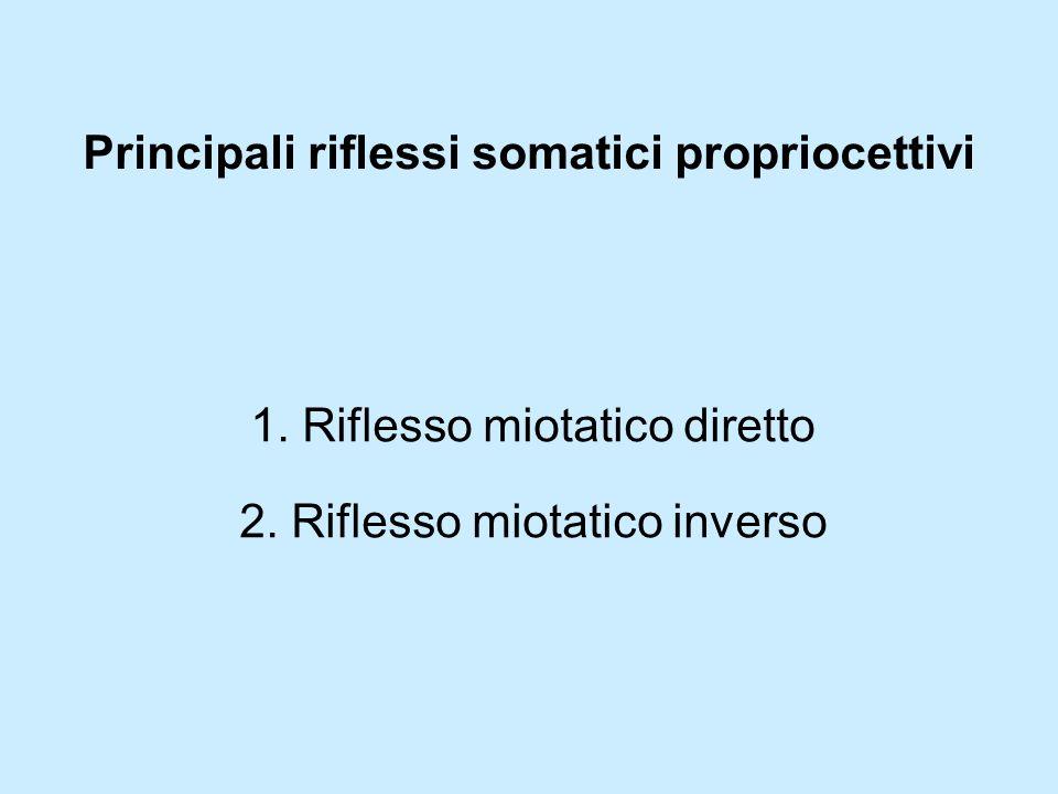 Principali riflessi somatici propriocettivi 1. Riflesso miotatico diretto 2. Riflesso miotatico inverso