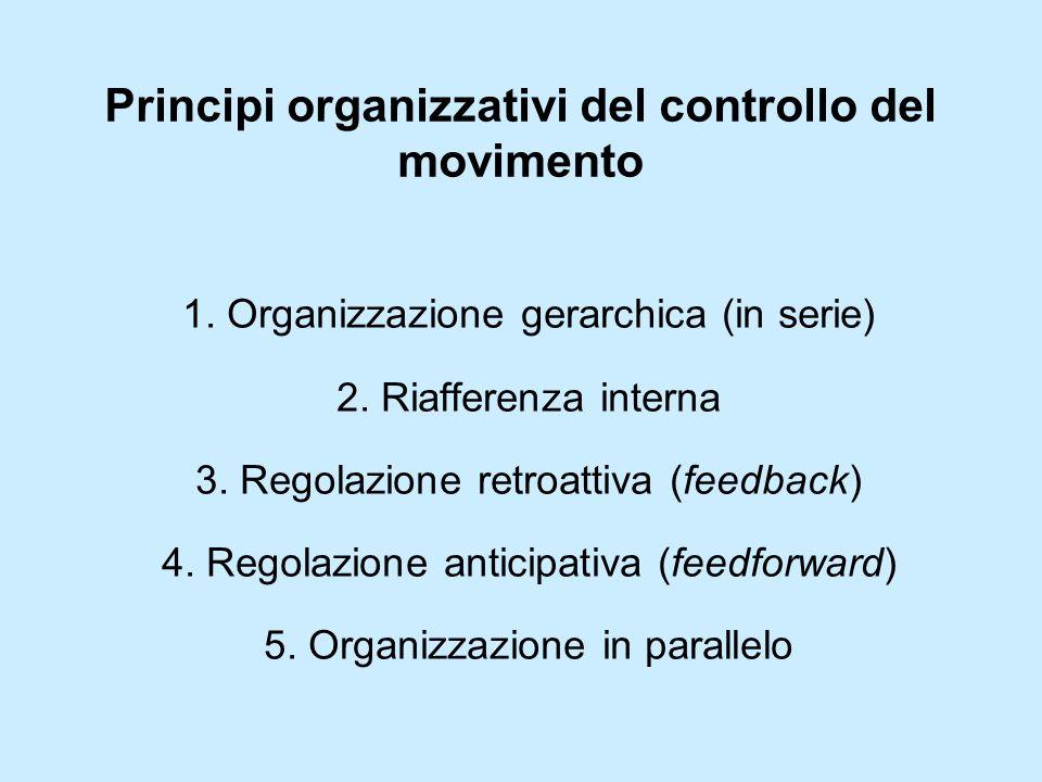Principi organizzativi del controllo del movimento 1. Organizzazione gerarchica (in serie) 2. Riafferenza interna 3. Regolazione retroattiva (feedback