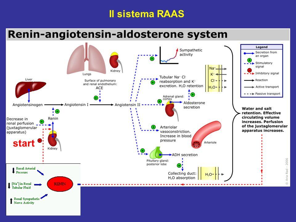 start Il sistema RAAS