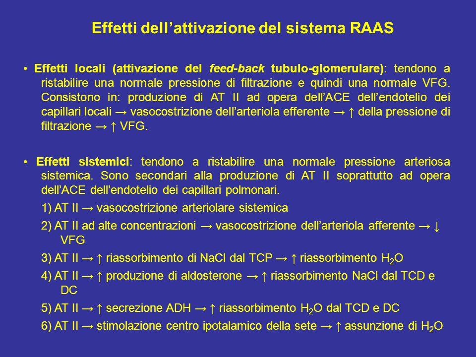 Effetti dellattivazione del sistema RAAS Effetti locali (attivazione del feed-back tubulo-glomerulare): tendono a ristabilire una normale pressione di