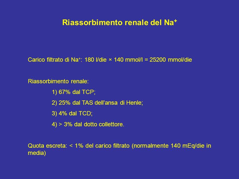 Riassorbimento renale del Na + Carico filtrato di Na + : 180 l/die × 140 mmol/l = 25200 mmol/die Riassorbimento renale: 1) 67% dal TCP; 2) 25% dal TAS
