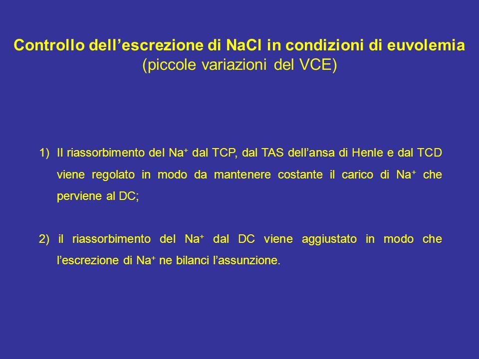 Controllo dellescrezione di NaCl in condizioni di euvolemia (piccole variazioni del VCE) 1)Il riassorbimento del Na + dal TCP, dal TAS dellansa di Hen