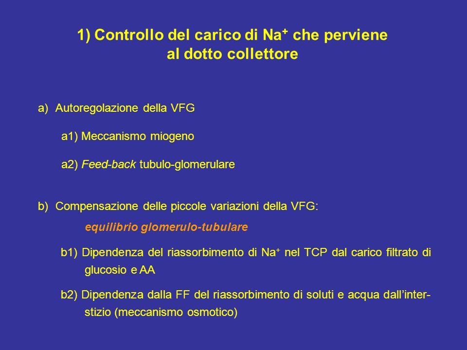 1)Controllo del carico di Na + che perviene al dotto collettore a)Autoregolazione della VFG a1) Meccanismo miogeno a2) Feed-back tubulo-glomerulare b)
