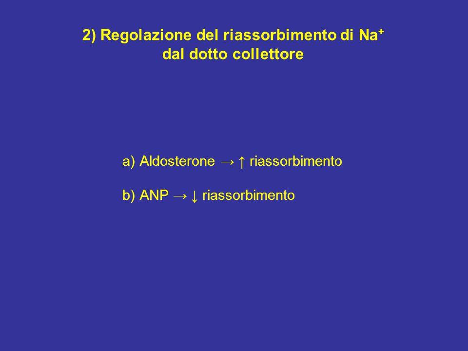 2) Regolazione del riassorbimento di Na + dal dotto collettore a)Aldosterone riassorbimento b)ANP riassorbimento
