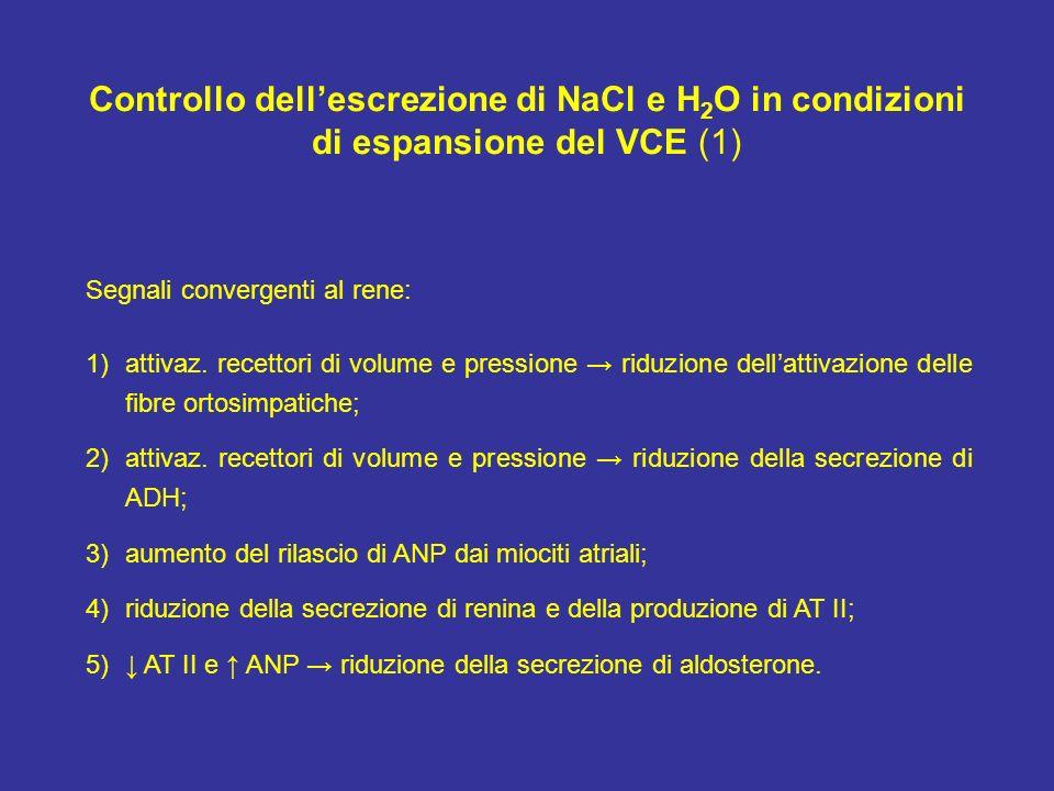 Controllo dellescrezione di NaCl e H 2 O in condizioni di espansione del VCE (1) Segnali convergenti al rene: 1)attivaz. recettori di volume e pressio
