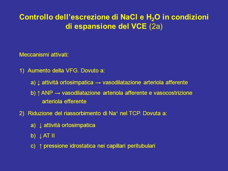 Controllo dellescrezione di NaCl e H 2 O in condizioni di espansione del VCE (2a) Meccanismi attivati: 1)Aumento della VFG. Dovuto a: a) attività orto