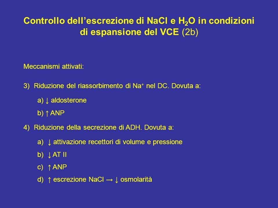 Controllo dellescrezione di NaCl e H 2 O in condizioni di espansione del VCE (2b) Meccanismi attivati: 3)Riduzione del riassorbimento di Na + nel DC.