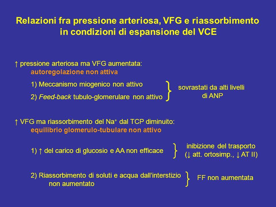 Relazioni fra pressione arteriosa, VFG e riassorbimento in condizioni di espansione del VCE pressione arteriosa ma VFG aumentata: autoregolazione non