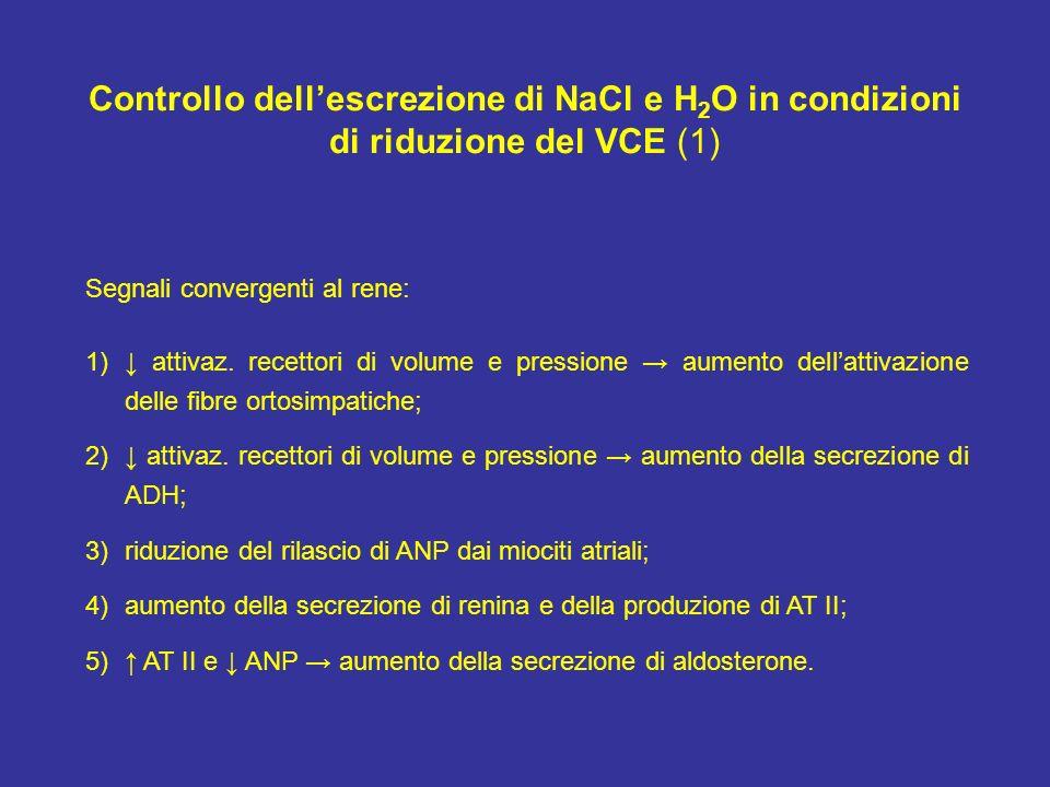 Controllo dellescrezione di NaCl e H 2 O in condizioni di riduzione del VCE (1) Segnali convergenti al rene: 1) attivaz. recettori di volume e pressio