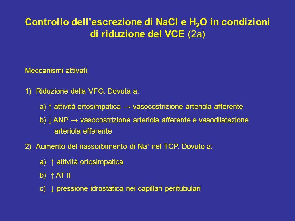 Controllo dellescrezione di NaCl e H 2 O in condizioni di riduzione del VCE (2a) Meccanismi attivati: 1)Riduzione della VFG. Dovuta a: a) attività ort