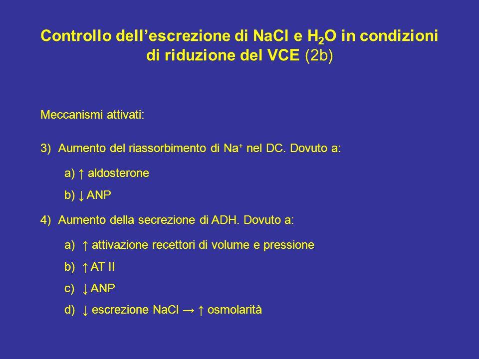 Controllo dellescrezione di NaCl e H 2 O in condizioni di riduzione del VCE (2b) Meccanismi attivati: 3)Aumento del riassorbimento di Na + nel DC. Dov