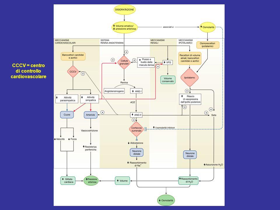 CCCV = centro di controllo cardiovascolare