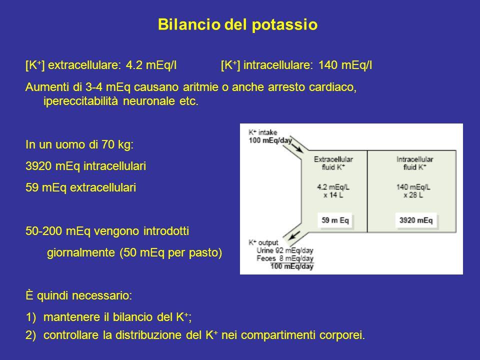 Bilancio del potassio [K + ] extracellulare: 4.2 mEq/l [K + ] intracellulare: 140 mEq/l Aumenti di 3-4 mEq causano aritmie o anche arresto cardiaco, i