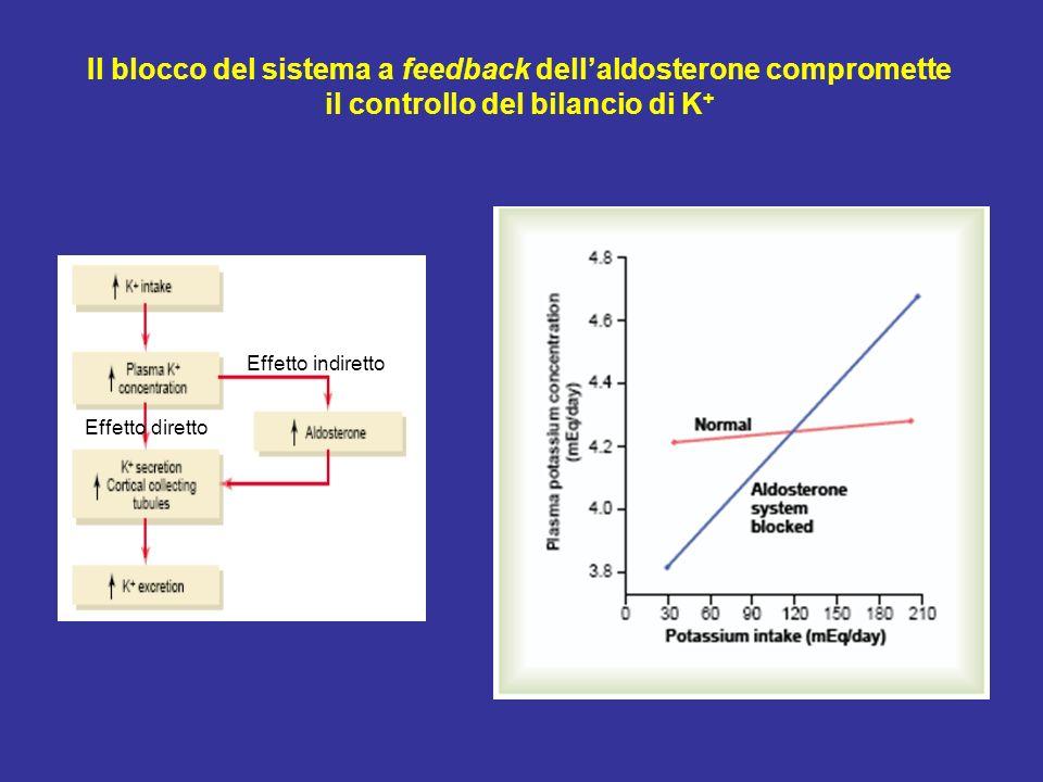 Il blocco del sistema a feedback dellaldosterone compromette il controllo del bilancio di K + Effetto diretto Effetto indiretto