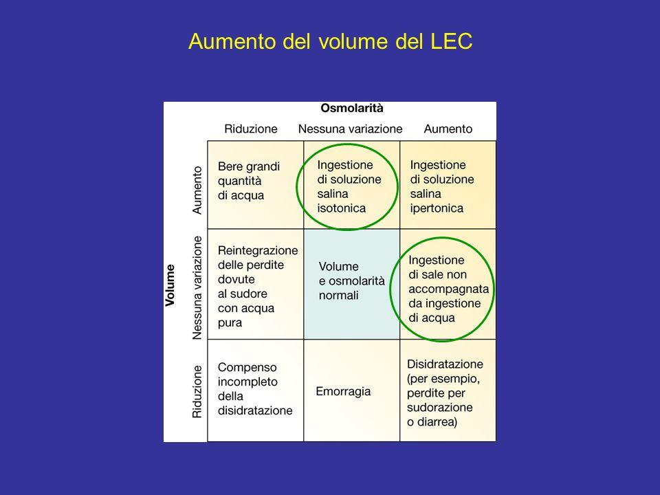 Aumento del volume del LEC