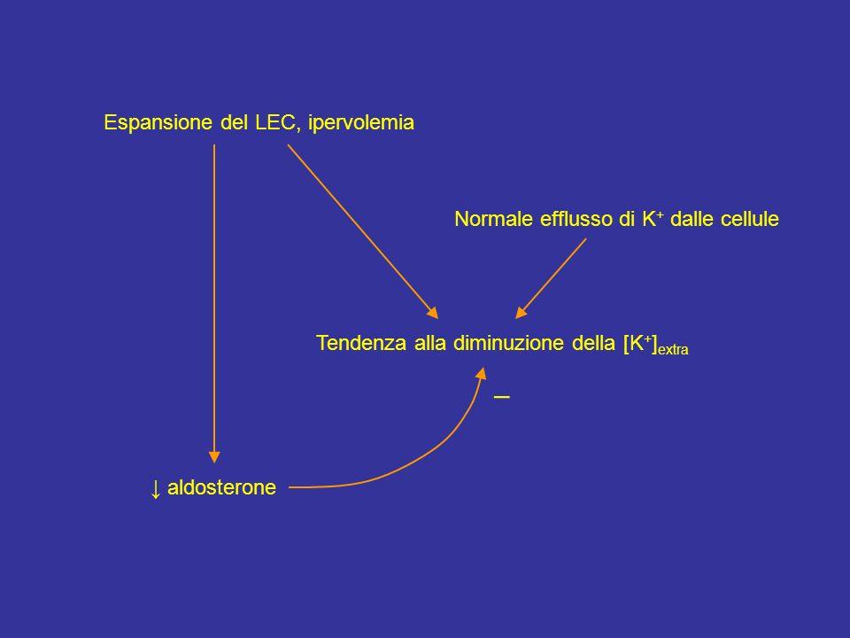 Espansione del LEC, ipervolemia Normale efflusso di K + dalle cellule Tendenza alla diminuzione della [K + ] extra aldosterone –