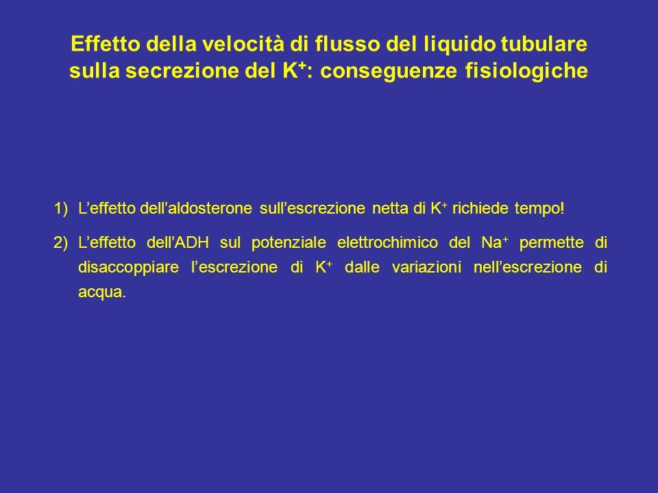 Effetto della velocità di flusso del liquido tubulare sulla secrezione del K + : conseguenze fisiologiche 1)Leffetto dellaldosterone sullescrezione ne