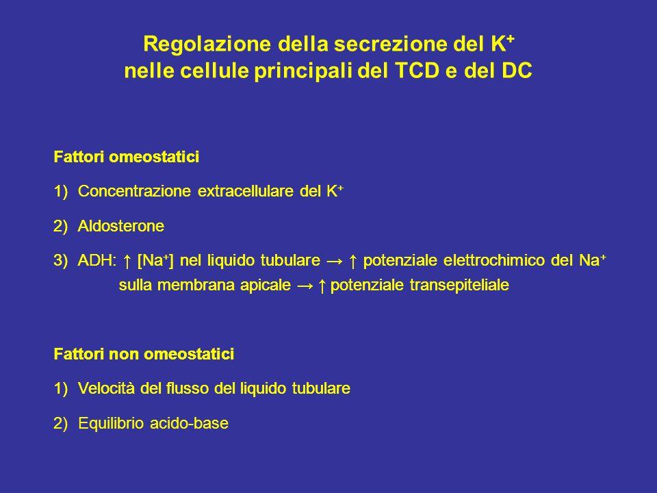 Regolazione della secrezione del K + nelle cellule principali del TCD e del DC Fattori omeostatici 1)Concentrazione extracellulare del K + 2)Aldostero