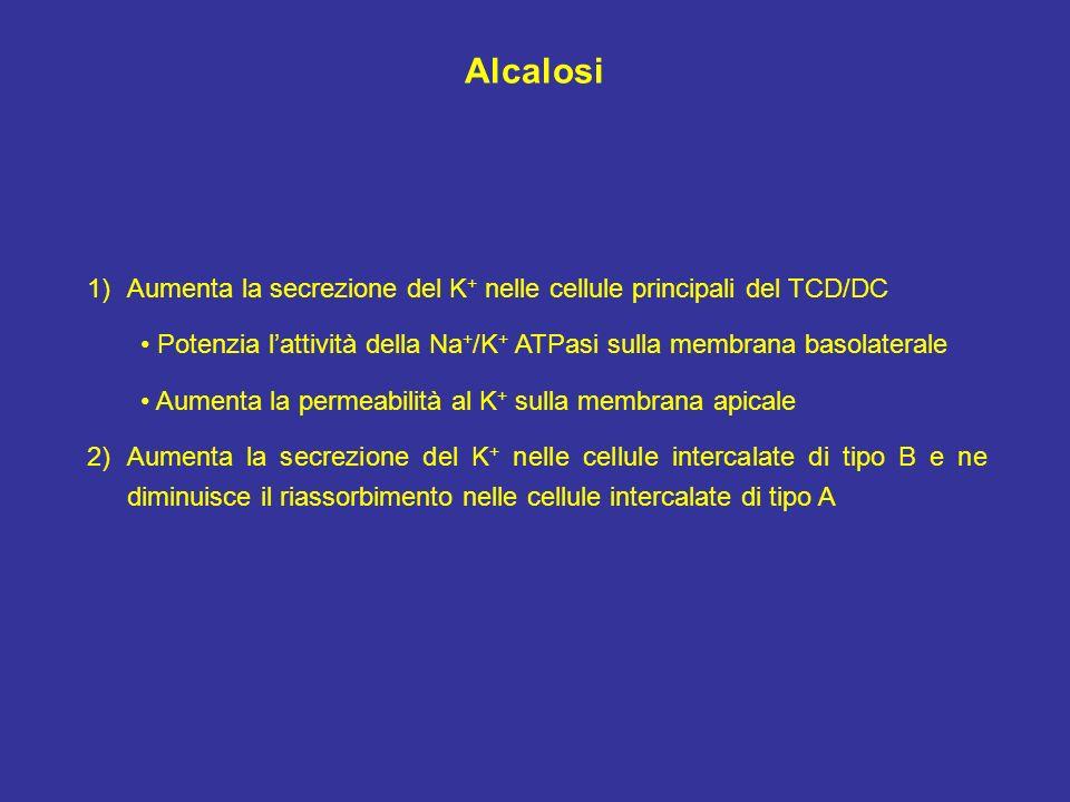 Alcalosi 1)Aumenta la secrezione del K + nelle cellule principali del TCD/DC Potenzia lattività della Na + /K + ATPasi sulla membrana basolaterale Aum