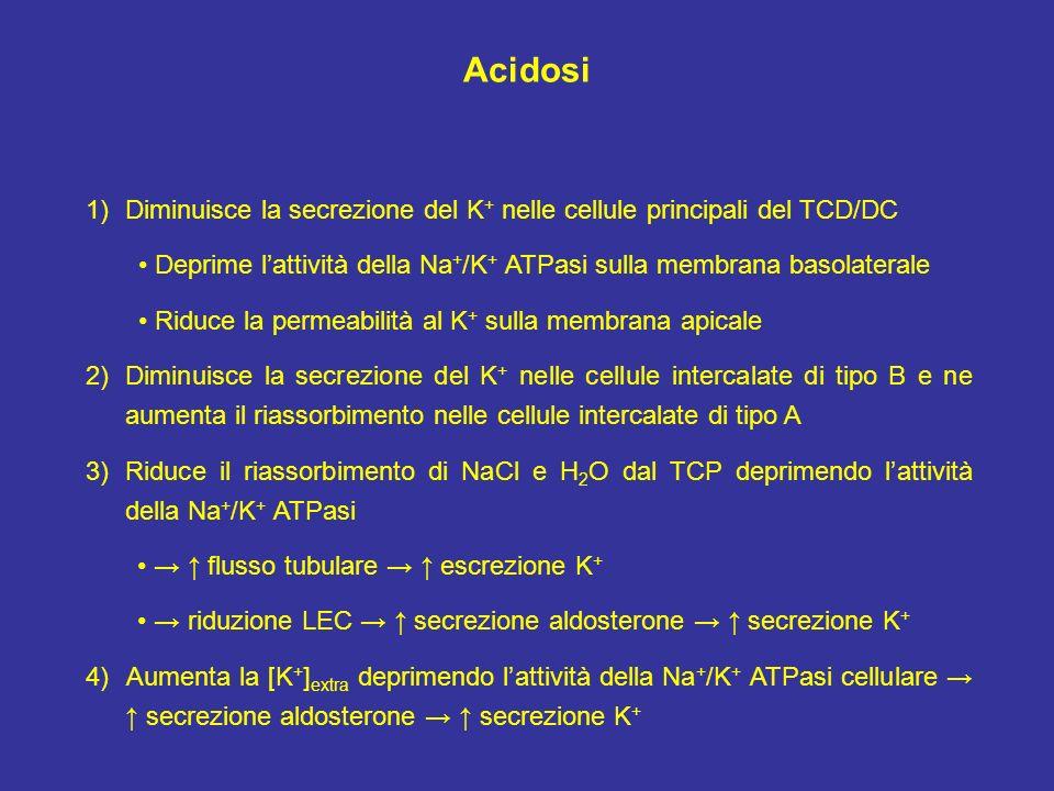 Acidosi 1)Diminuisce la secrezione del K + nelle cellule principali del TCD/DC Deprime lattività della Na + /K + ATPasi sulla membrana basolaterale Ri