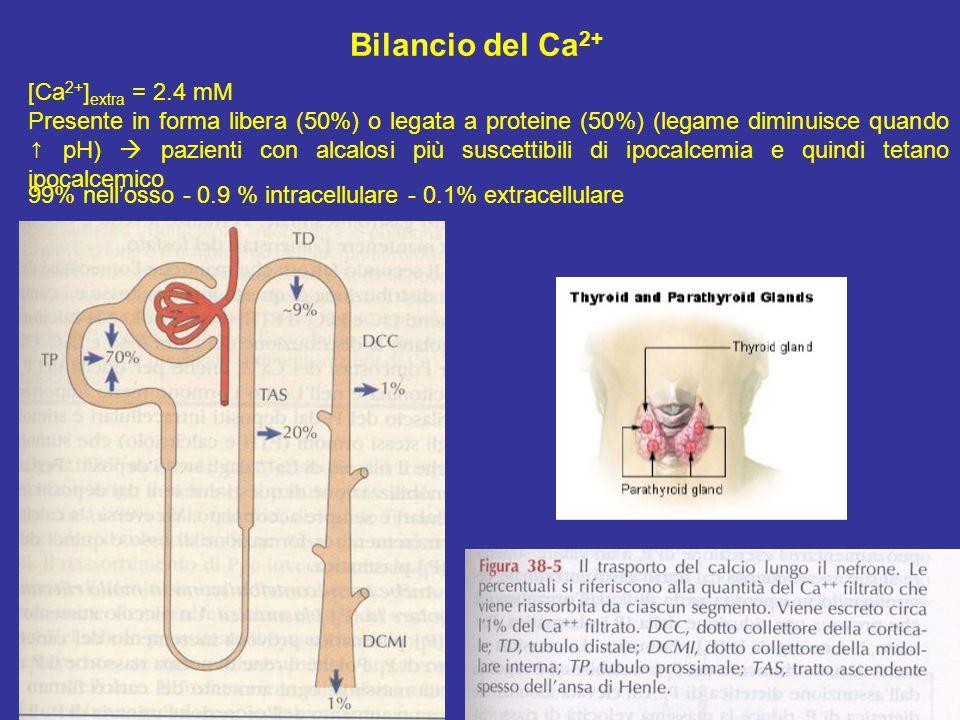 Bilancio del Ca 2+ [Ca 2+ ] extra = 2.4 mM Presente in forma libera (50%) o legata a proteine (50%) (legame diminuisce quando pH) pazienti con alcalos