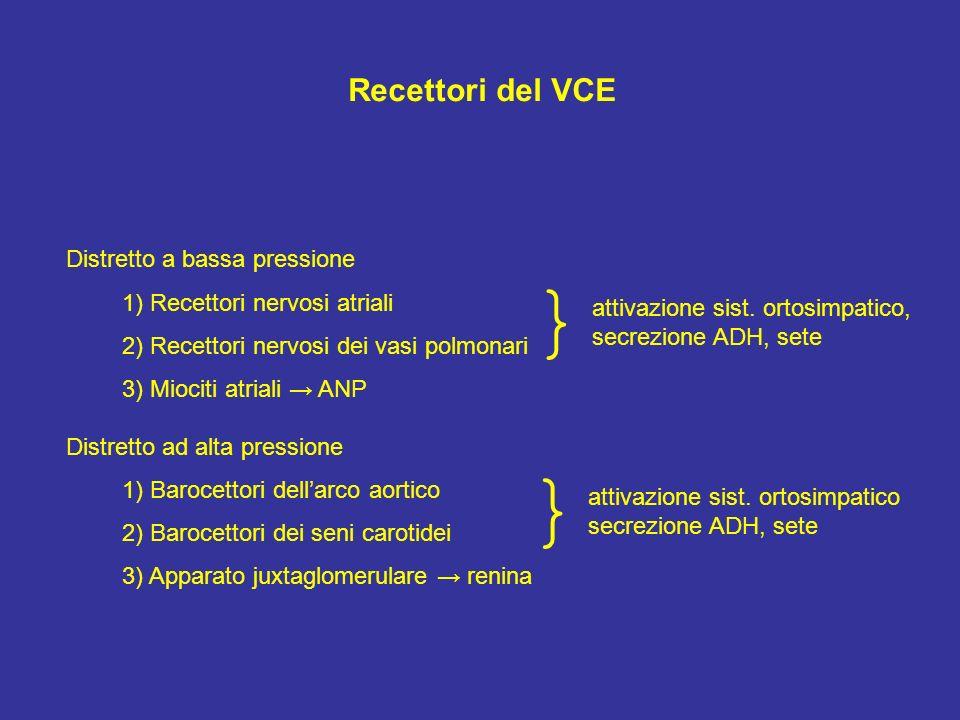 Recettori del VCE Distretto a bassa pressione 1) Recettori nervosi atriali 2) Recettori nervosi dei vasi polmonari 3) Miociti atriali ANP Distretto ad