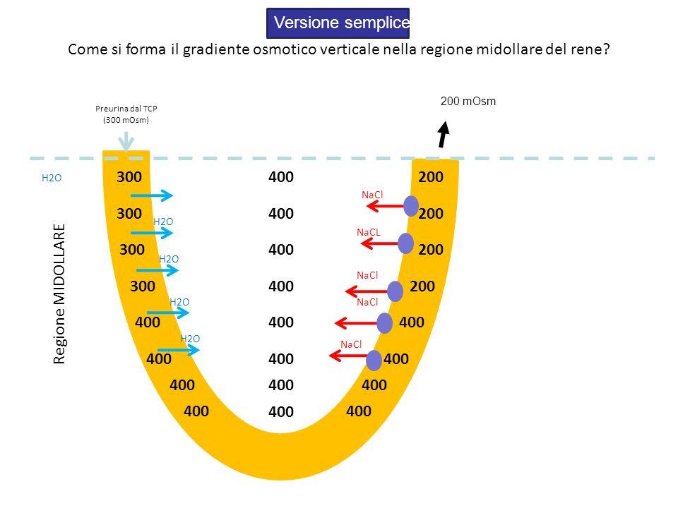Come si forma il gradiente osmotico verticale nella regione midollare del rene? Regione MIDOLLARE Preurina dal TCP (300 mOsm) Versione semplice H2O Na