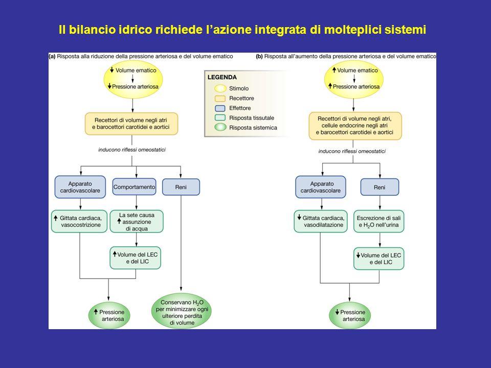 Il bilancio idrico richiede lazione integrata di molteplici sistemi